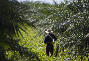 How to build deforestation-free supply chains: lessons from Indonesia