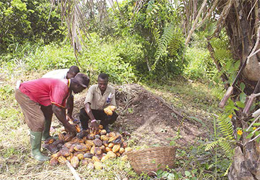 Action oriented Public-Private Partnerships to tackle deforestation in West Africa