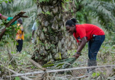 Towards Sustainable Palm Oil in Africa