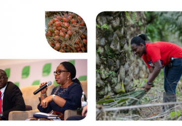 Main Successes of the Tropical Forest Alliance Africa Palm Oil Initiative