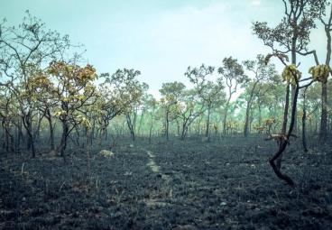 How can Indonesia extinguish its forest fires for good?