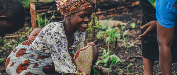 Moving towards Marrakesh: sustainable palm oil agreement between nine African countries