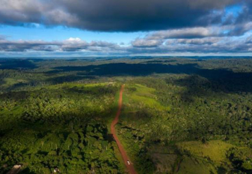 From plans to action: why governments need to step up to end deforestation