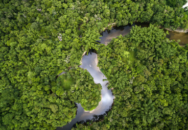 Why collective action can save tropical forests… and us
