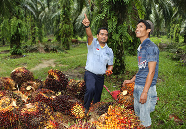Cargill's latest quarterly Sustainable Palm Oil Progress Update