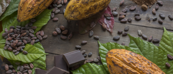 Press Release: Brazil, Colombia and Peru work on a common agenda for Amazon Sustainable Cocoa