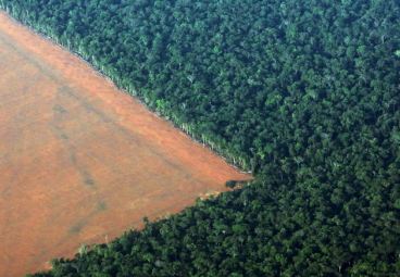 Deforestation is one of the greatest challenges facing humanity – here's one way to stop it