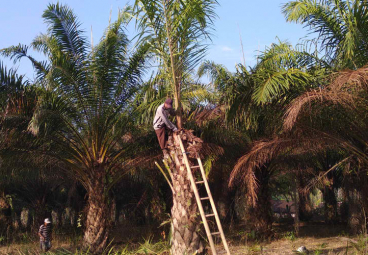 Q&A: Can palm oil ever be sustainable?