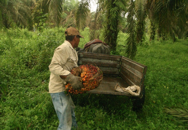 How can we make palm oil more sustainable?