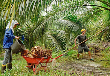 Indonesia's East Kalimantan Province Commits to New Green Growth Pathway