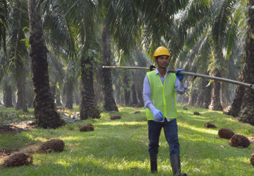 Partner News: Mars Palm Positive Plan Delivers Deforestation-Free Palm Oil Supply Chain