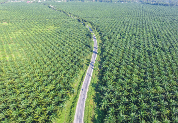 Press Release: Palm oil value chain actors in Peru, Colombia and Central America demonstrate progress towards deforestation-free and sustainable production
