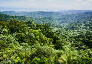 New Online Resource Hub for Companies Engaged at Jurisdictional Level for Deforestation-free Supply Chains
