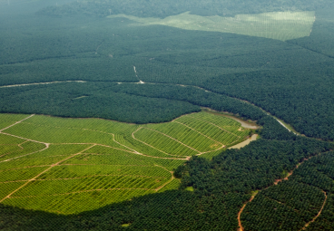 Is the world keeping its promise to protect forests?