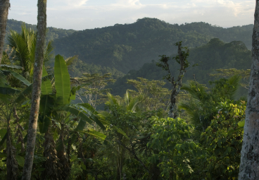 Q&A: Why saving our forests should be a global priority?